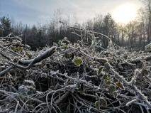 Allendorf Winter 2020 (3)