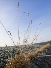 Allendorf Winter 2020 (5)